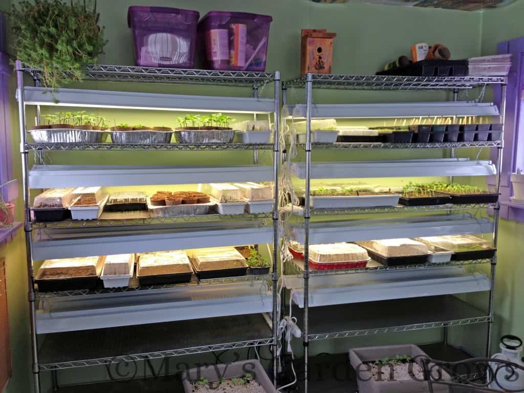 Seedling Shelves
