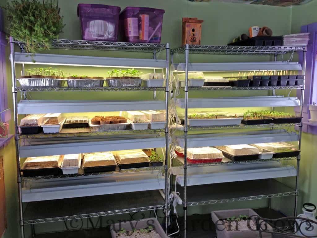 Seedling Shelves