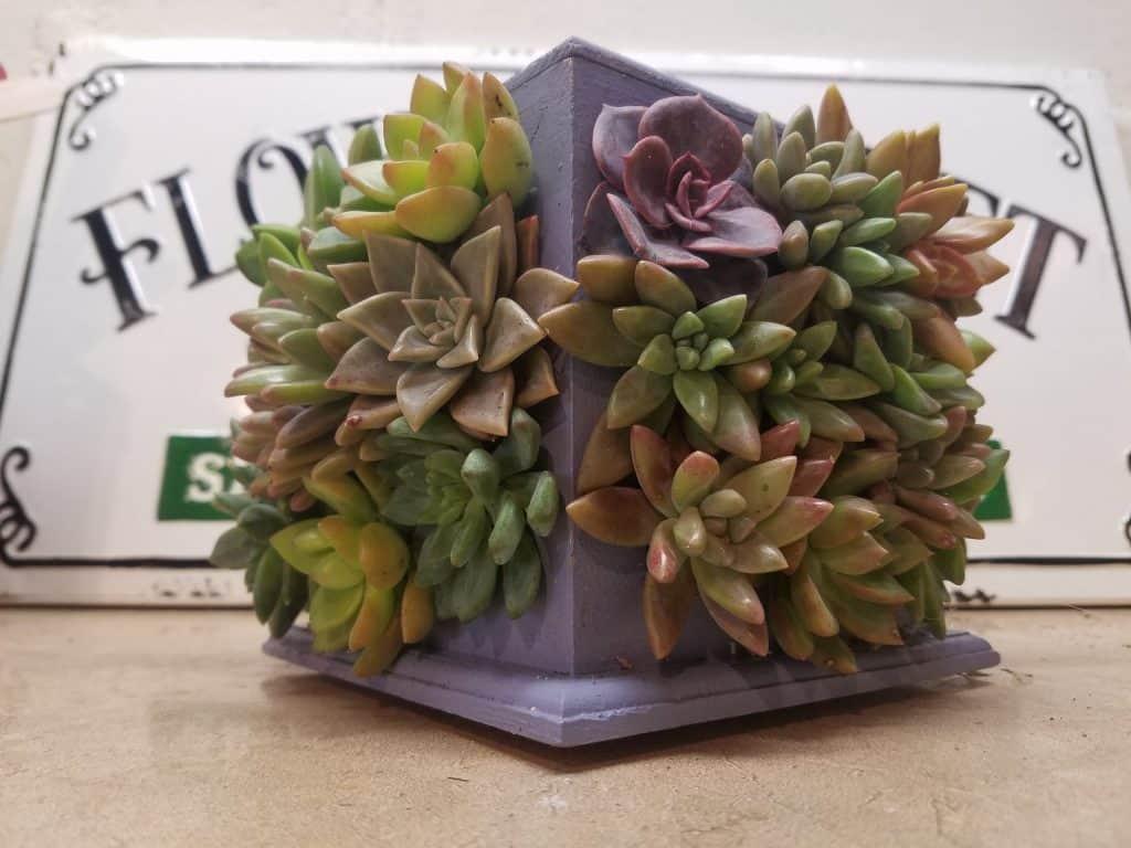 4 Way Succulent Frame